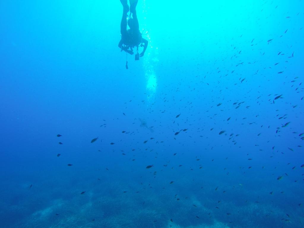 <p>Diving Center Blue Reef. Vieni a scoprire insieme a noi le meraviglie dei fondali marini delle coste di Palermo e Catania&#8230; &nbsp; &nbsp; ITALIASUB Il portale dei subacquei &#8211; www.italiasub.it Tenuta Di Marco Prodotti gastronomici di produzione propria, biologici e a km 0.</p>